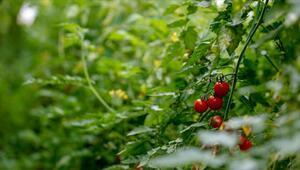 Türk tarımı, yatırımcılar için birçok alanda cazip imkanlar barındırıyor