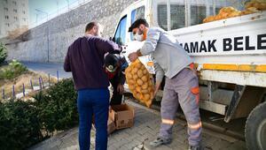 150 ton patates dağıtılıyor