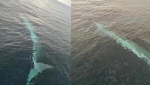 Balıkçıların kamerasına 15 metrelik oluklu balina takıldı