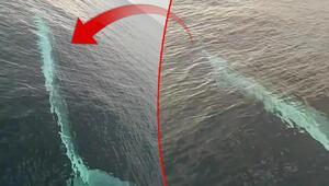 Adanada balıkçıların kamerasına 15 metrelik oluklu balina takıldı
