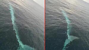 Adanada görülen balina ile ilgili açıklama geldi Dünyanın ikinci büyük türü...