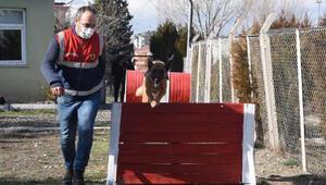 Özel eğitimli köpekler Kütahyanın en çalışkanları oldu