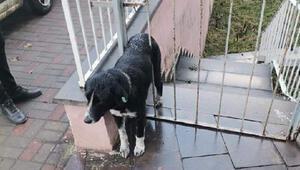 Kapı demirine sıkışan köpeği ekipler kurtardı