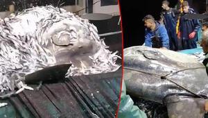 Adanada ay balığı balıkçıların ağına takıldı Nadir görülüyor