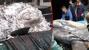 Adanada balıkçıların ağına takılan nesli tehlike altındaki ay balığı, tekrar denize bırakıldı