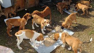 Orman köpeklerine ayda 90 ton yemek