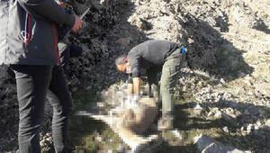 Tuncelide, koruma altındaki 7 yaban keçisi ölü bulundu