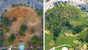 Pakistandan 10 kat hızlı ağaç yetiştirme kampanyası