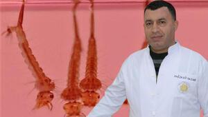 Sivrisinek sayısındaki artışa dikkat çeken Prof. Dr. Ali Satar uyardı: Virüs bulaştırırlar