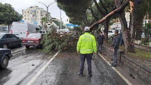 Ağacın kırılan dalı, yola devrildi