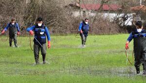 Karabağlar Yaylasında 350 hektarlık sulak alanda biyolojik vektör mücadelesi başladı