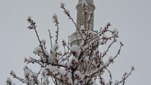 Aksarayda erken çiçeklenen ağaçlar, karda bembeyaz oldu