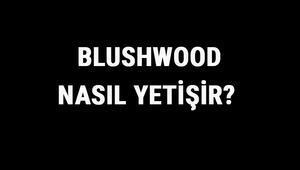 Blushwood Nasıl Yetişir Blushwood Türkiyede En Çok Ve En İyi Nerede Yetişir Ve Nasıl Yetiştirilir
