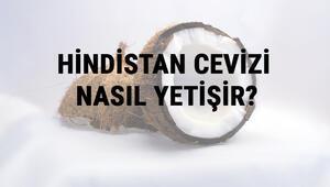 Hindistan Cevizi Nasıl Yetişir Hindistan Cevizi Türkiyede En Çok Ve En İyi Nerede Yetişir Ve Nasıl Yetiştirilir