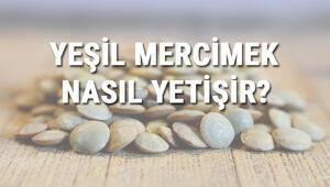 Yeşil Mercimek Nasıl Yetişir Yeşil Mercimek Türkiyede En Çok Ve En İyi Nerede Yetişir Ve Nasıl Yetiştirilir