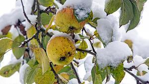 Bir gün güneş ertesi gün kar Bu havalar tarımı nasıl etkiliyor