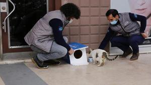 Başakşehir'de Dünya Kediler Günü'nde sevimli dostlar unutulmadı