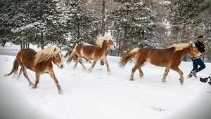 Kar içinde dört nala
