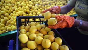 Türkiyeden ocak ayında 31,4 milyon dolarlık limon ihraç edildi