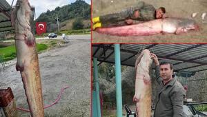 Balıkçıların ağına takıldı 2,5 metre boyunda, 77 kilo ağırlığında...