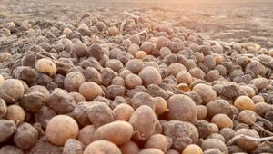 Patates Nasıl Yetişir Patates Türkiyede En Çok Ve En İyi Nerede Yetişir Ve Nasıl Yetiştirilir