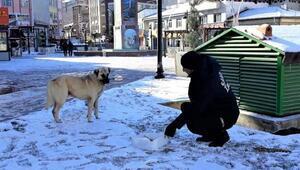 Sandıklıda sokak hayvanları için yem bırakıldı