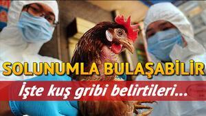 Kuş gribi nedir ve nasıl bulaşır Kuş gribi belirtileri ve tedavisi (aşısı) ile ilgili bilgiler