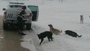 Jandarma, Perşembe Yaylası'ndaki hayvanları unutmadı