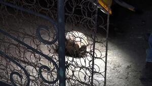 Temizlik yaparken bahçede insan kafatası bulundu