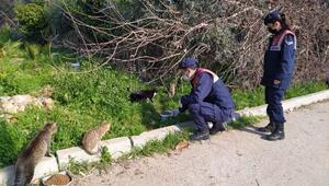 Jandarmadan hayvanlara şefkat eli