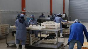 İtalyada gördüğü meyve ve sebze kurutma tesisini Niğdede kurarak yurt dışına açıldı
