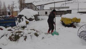 Karslı çiftçinin beyaz altını; kar