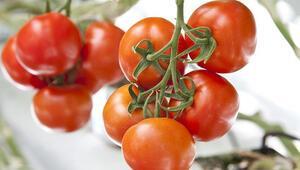 Ağrıda eksi 30 derecede domates yetiştirilecek
