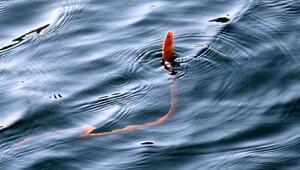Yılan kurdu balığı Çanakkale Boğazında görüntülendi