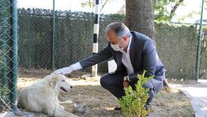 Sokak hayvanlarına modern rehabilitasyon merkezi