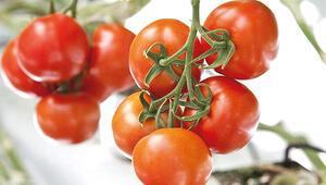 Ağrı'da eksi 30 derecede domates üretimi yapılacak