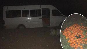 5 ton meyve çalan 5 şüpheli suçüstü yakalandı