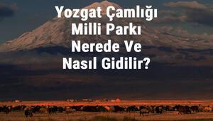 Yozgat Çamlığı Milli Parkı Nerede Ve Nasıl Gidilir Yozgat Çamlığı Milli Parkı Konaklama, Kamp, Giriş Ücreti Ve Özellikleri Hakkında Bilgi