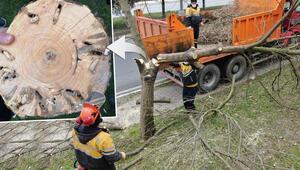 İstanbulun ağaçlarında korkutan tehlike Hepsini tek tek kestiler...