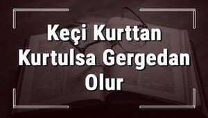 Keçi Kurttan Kurtulsa Gergedan Olur atasözünün anlamı ve örnek cümle içinde kullanımı (TDK)
