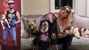Dehşet anları kamerada: Lady Gaga iki köpeğine 500 bin dolar ödül koydu