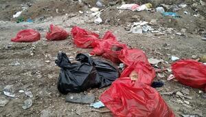 Ankarada molozların arasında 20 ölü köpek bulundu