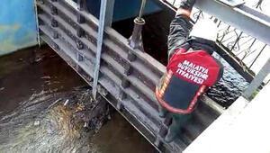Kanalda mahsur kalan kediyi itfaiye kurtardı