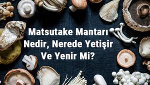 Matsutake Mantarı Nedir, Nerede Yetişir Ve Yenir Mi Matsutake Mantarı Faydaları, Yetiştiriciliği Ve Özellikleri