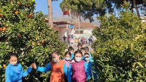 Aydınlı öğrenciler Erzurumdaki kardeşleri için mandalina topladı