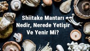 Shiitake Mantarı Nedir, Nerede Yetişir Ve Yenir Mi Şitaki Mantarı Faydaları, Yetiştiriciliği Ve Özellikleri