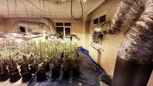 Çatı katında milyon TLlik zehir bahçesi Uyuşturucu operasyonunda 1 gözaltı