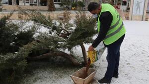 Çamelide kar yağışında kuşlar ve sokak hayvanları unutulmadı