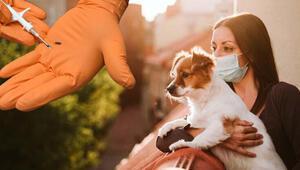 Resmi Gazetede yayımlandı Kedi, köpek ve gelincik sahipleri dikkat, cezası var