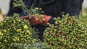Çiçek sektörü dış talebe yetişemiyor